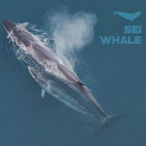 Sei Whale Bio- Based Epoxidharz (nur Harz) 5L